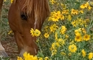 free affirmation w/ horse and flowers