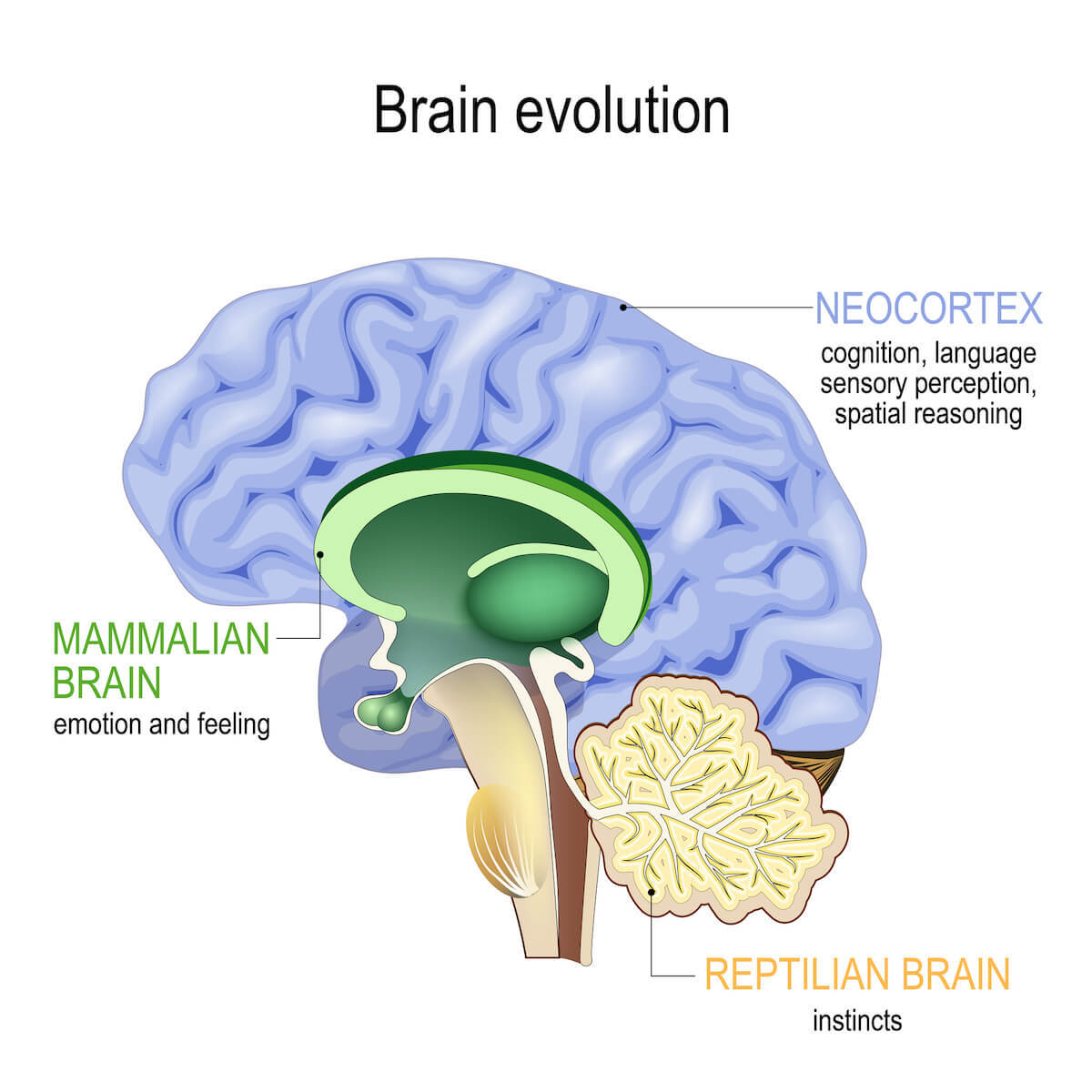 three areas of the evolutionary brain responsible for freezing up and fight or flight instincts